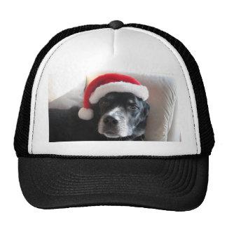 Santa Dog-Labrador Rottweiler Mix Mesh Hat