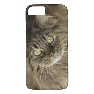 Santa Fe, New Mexico, USA. Maine coon cat. (PR) iPhone 7 Case