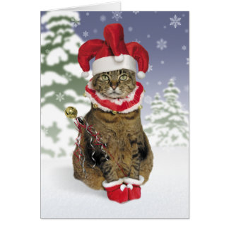 Santa Jester Cat Christmas Cards