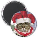 Santa Jester Cat Christmas Magnet