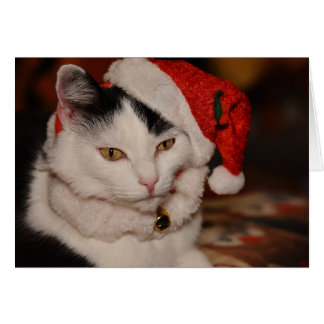 Santa Kitty | Black and White Cat Card