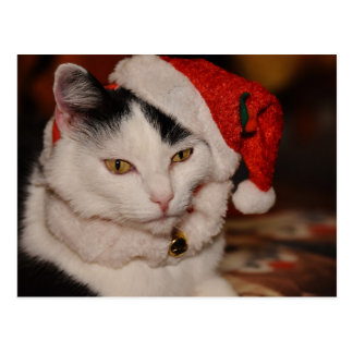 Santa Kitty | Black and White Cat Postcard