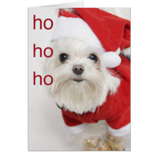 Santa Maltese Puppy Christmas Card