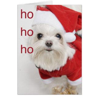Santa Maltese Puppy Christmas Greeting Card