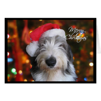 Santa Old English Sheepdog Christmas Card
