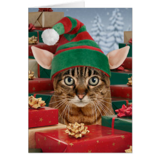 Santa's Elf-Cat Christmas Card