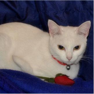 Sara, the white cat standing photo sculpture