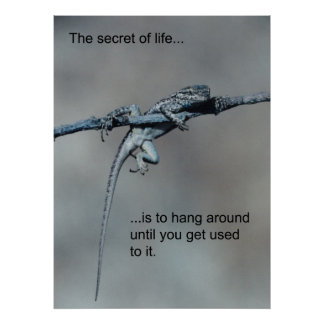 Sarcastic Lizard Secret of Life Poster