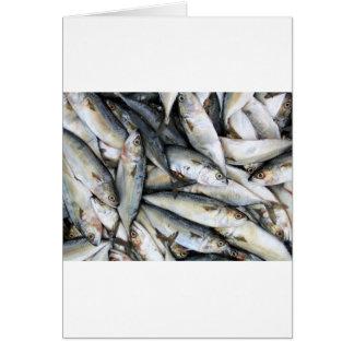 Sardines Card