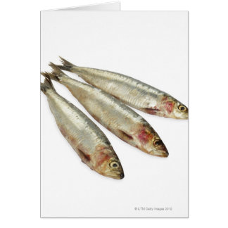 Sardines (Pilchards) Card