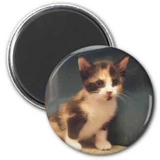 Sassy Calico Kitty 6 Cm Round Magnet