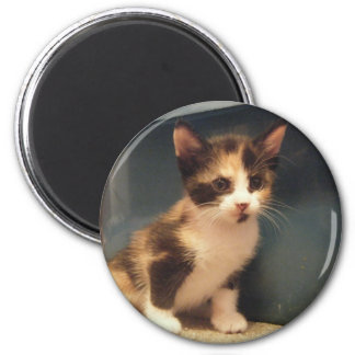 Sassy Calico Kitty Refrigerator Magnets