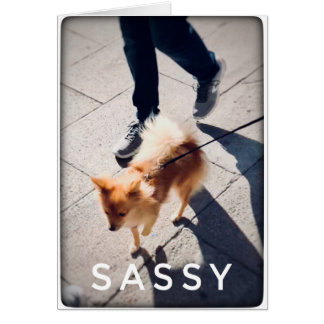 Sassy Pomeranian Blank Greeting Card