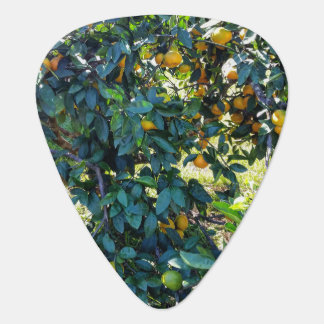 Satsuma Guitar Pick