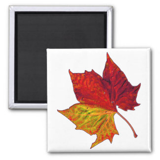 Saturated Sycamore Square Magnet