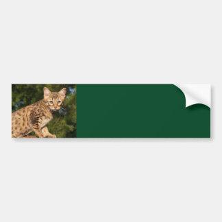 Savannah Cat Background Bumper Sticker
