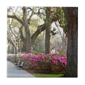 Savannah Georgia in Spring Forsyth Park Azaleas Oa Tile