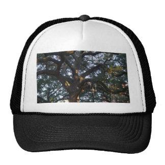 Savannah Oak Cap