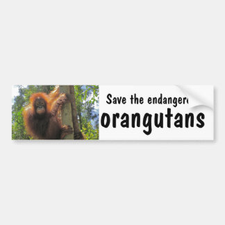 Save Endangered Orangutans Bumper Sticker