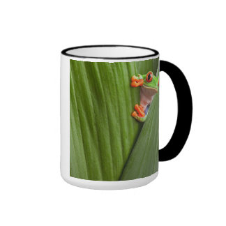 save eyed tree frog ringer mug