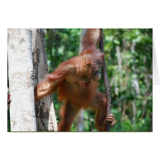 Save Great Apes wildlife note card