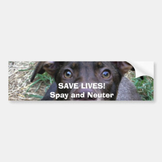 SAVE LIVES!Spay and Neuter Bumper Sticker