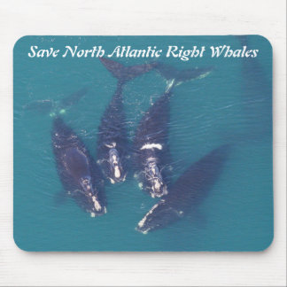 Save North Atlantic Right Whales by RoseWrites Mouse Pad