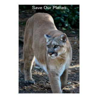 """Save Our Planet"" Cougar Photo Poster"