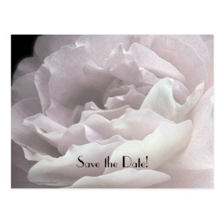 Save the Date 75th Birthday Party Rose Petals Postcard