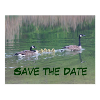 Save The Date Canada Geese Nature Postcard