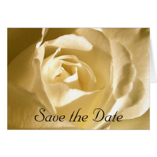Save the Date Cream Rose Photo Card
