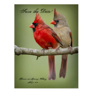 Save the Date for our Wedding/Cardinal Pair Postcard
