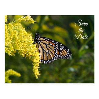 Save the Date Monarch Butterfly Postcard