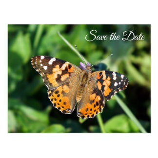 Save the Date Painted Lady Butterfly Postcard