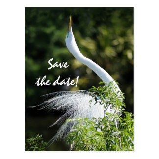 Save the date! postcard