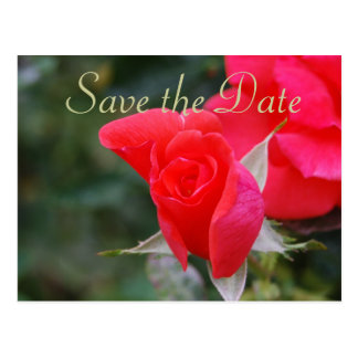 Save the Date Red Rose Postcard
