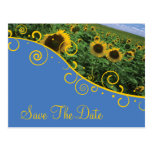 Save The Date - Sunflowers Postcard