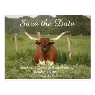 Save the Date Texas Longhorn Postcard