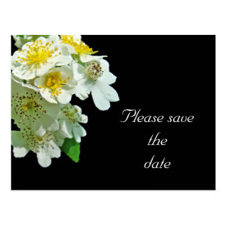 Save the Date White Multiflora Roses Wildflower Postcard