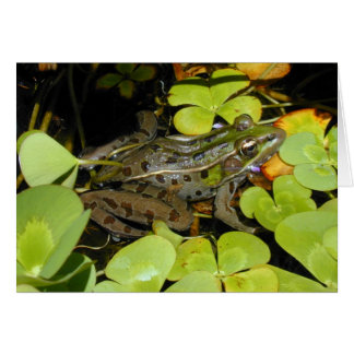 Save the Frogs - Leopard Frog Card
