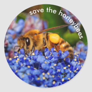 Save the Honeybees Pollinating California Lilac Classic Round Sticker