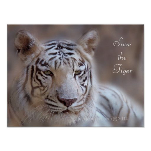 Save the Tiger White Bengal Tiger Posters