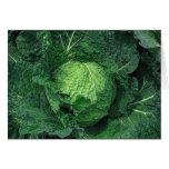 Savoy Cabbage Cards