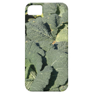 Savoy cabbage plants in a field. barely there iPhone 5 case