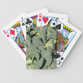 Savoy cabbage plants in a field. bicycle playing cards