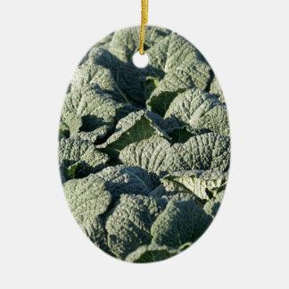 Savoy cabbage plants in a field. ceramic ornament