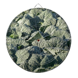 Savoy cabbage plants in a field. dartboard
