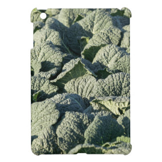 Savoy cabbage plants in a field. iPad mini cover
