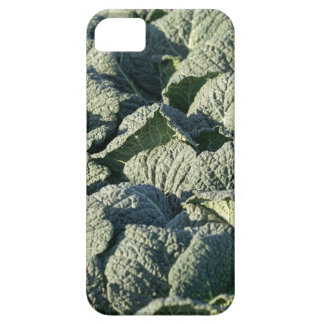 Savoy cabbage plants in a field. iPhone 5 cover