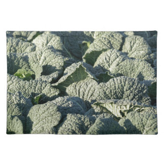 Savoy cabbage plants in a field. placemat